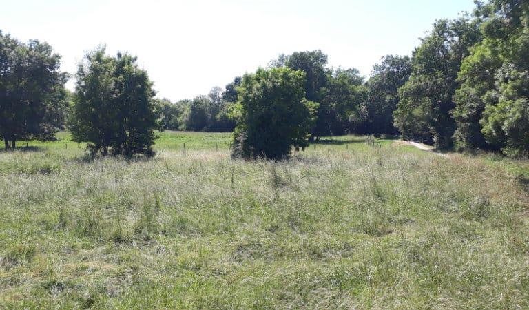 Promenade nature à Jonzac