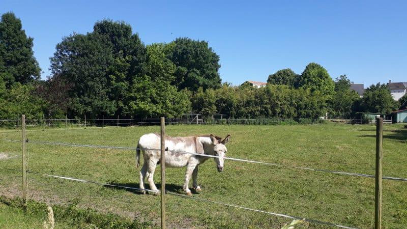 Dîtes bonjour au bel âne !