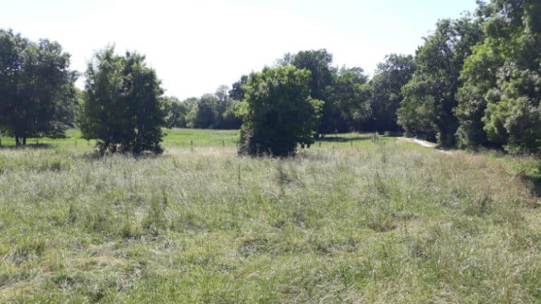 Promenade nature à Jonzac | Le Mail de Seugne