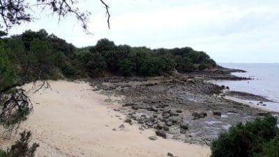 Goûter quelques huîtres sauvages à marée basse sur l'île d'Aix